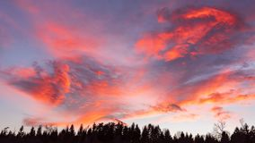 Clouds red orange blue and violet color sunset dramatic sky background. Forest in foreground stock images