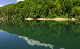 Clouds reflecting in a forest lake Royalty Free Stock Images