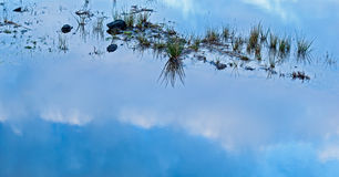 Clouds Reflection. Grass and clouds reflection in water stock photography