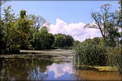 clouds reflexion Arkivbilder