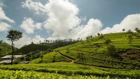 Sri Lanka Lipton seat tea plantation fields in Nuwara Eliya. time-lapse during sunrise with clouds rushing by in 4K stock video footage