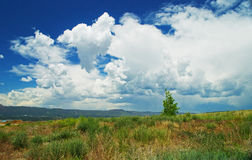 Clouds and Scrub Brush Royalty Free Stock Photo
