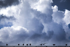 Clouds and seagulls Stock Images