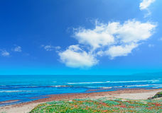 Clouds and seaweeds Royalty Free Stock Image