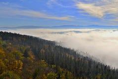 clouds skogen Royaltyfri Bild