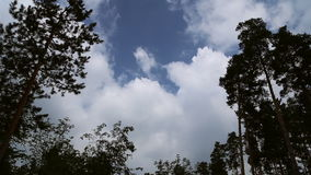 The clouds in the sky. On the background of trees stock video footage