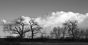 Clouds, Sky and Bare Cottonwoods in Silhouette Royalty Free Stock Photography