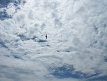 The clouds in the sky. A bird in the sky. Nature Royalty Free Stock Images