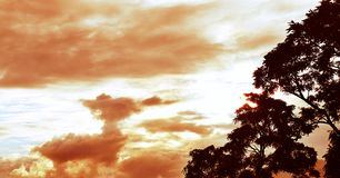 A Tree Silhouette with Background of Cloudy Sky With Sepia Effect Royalty Free Stock Photos