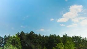 Clouds in the sky moving above the trees. Above the tall green trees smoothly moving white, gray rain clouds. Time lapse stock footage