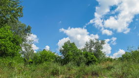 Clouds In The Sky Moving Above The Trees. Time lapse. Clouds In The Sky Moving Above The Trees. Above the tall green three smoothly moving white, gray rain stock footage