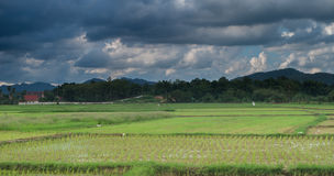 Clouds sky and rice fields Stock Photography