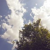 Clouds at sky. Tree and clouds Royalty Free Stock Images