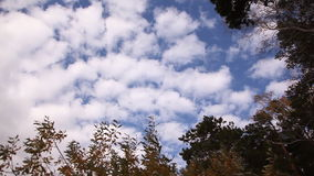 Clouds Sky Trees stock video footage