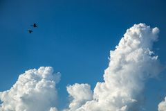 Ibis birds flying through the sky with clouds Royalty Free Stock Photography