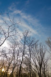 clouds skyen Fotografering för Bildbyråer