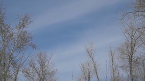 Clouds slowly move over trees. Without leaves stock video