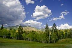 clouds sommar Arkivbilder