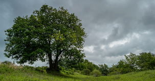 Clouds before the storm. Video of landscape with one large tree in full leaf blown about by a rising wind and with dark  storm clouds moving rapidly behind stock video footage