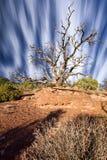 Clouds Streaking Behind a Dead Juniper Tree stock photos