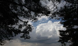 Clouds in the summer sky through the branches of pines Stock Image