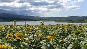 Clouds Sunrays Sunflowers Fields Kestel Bursa Turkey stock image
