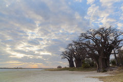Clouds and sunset at Baines baobabs Stock Image