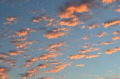Clouds in the sunset like cotton. Colored clouds during sunset at the beach Royalty Free Stock Photography