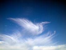 clouds swanwhite Royaltyfria Bilder