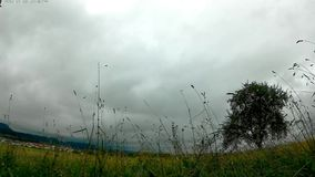 Clouds in a time-lapse. With a meadow and a tree stock video