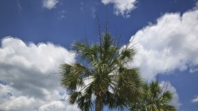 Clouds timelapse with palm tree. Time lapse of clouds rolling by on summer afternoon with palm tree in foreground stock footage