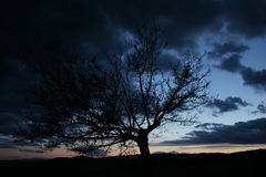 Clouds and tree. Dark clouds and a tree in the early night Stock Photography