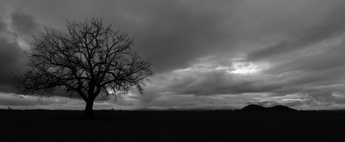 Clouds and Tree. Black and white photo of a winter tree in a field with the evening sun peeking through the clouds Stock Photography
