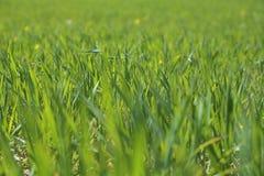 Clean green grass Stock Photos