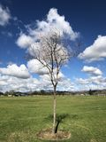 Clouds tree spring Royalty Free Stock Photos