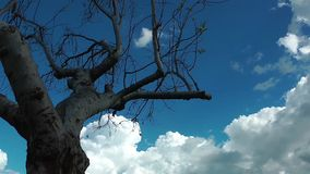 Clouds and the Tree Time Lapse. Video stock video footage