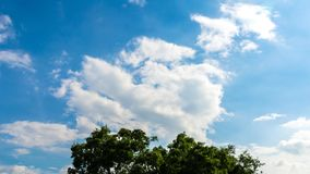 Clouds and tree top movement, Time lapse stock video