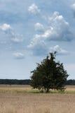 clouds treen Royaltyfria Bilder