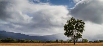 clouds treen arkivfoton