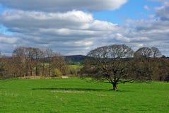clouds trees Royaltyfria Bilder