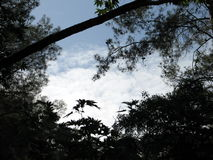 clouds trees Royaltyfri Bild