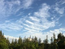 Clouds above trees. Clouds forming above trees in south Florida Stock Photography