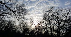 Clouds and Trees. Late afternoon clouds in Forth Worth, Texas Royalty Free Stock Images