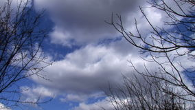 Clouds And Trees Time Lapse. Big Cloud Build-Up - Time Lapse stock video