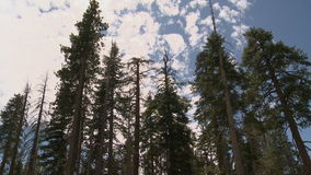 Clouds Trees Time Lapse - Nice - Clip 1. Time Lapse of clouds passing over trees producing nice shadows stock footage