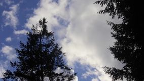 Clouds and trees in the wind. Trees and clouds blowing in the wind stock footage