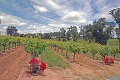 clouds vingården Royaltyfria Bilder