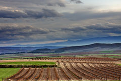clouds vinyard Royaltyfri Bild