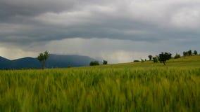 Clouds, Wheat fields, june 2016, Turkey. Clouds, Wheat fields, june 2016, HD 1080 stock video