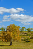 clouds and White Birch in the autumn Stock Photo